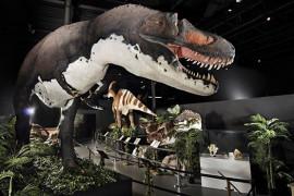 Branson Dinosaur Museum, Branson MO Shows (0)