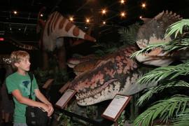 Branson Dinosaur Museum, Branson MO Shows (1)