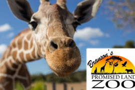 Branson's Promised Land Zoo, Branson MO Shows (0)