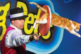 Amazing Pets, Branson MO Shows (2)