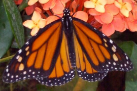 Butterfly Palace & Rainforest Adventure, Branson MO Shows (0)