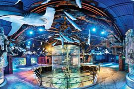 Wonders of Wildlife Museum & Aquarium, Branson MO Shows (0)