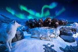 Wonders of Wildlife Museum & Aquarium, Branson MO Shows (1)