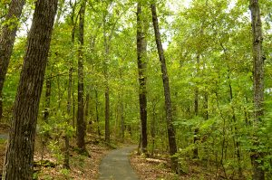 Hiking Trails in Branson, MO