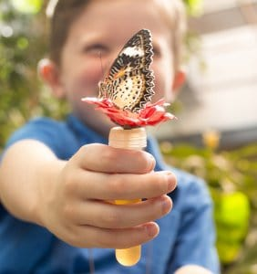 Feeding a butterfly!